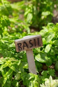 basic herb garden