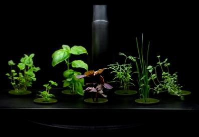 hydroponic gardens, hydroponic garden kit, basil, hydroponic systems