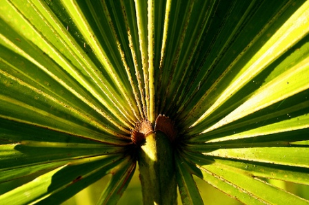 saw palmetto, herbal hair loss remedy